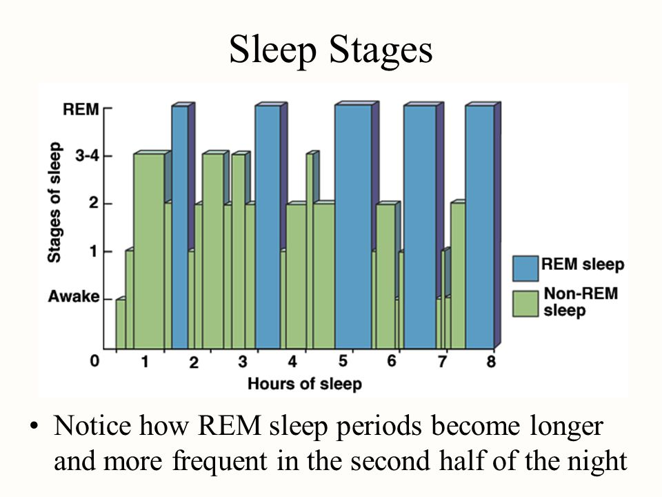 Sleep Stages Notice how REM sleep periods become longer and more frequent in the second half of the night.
