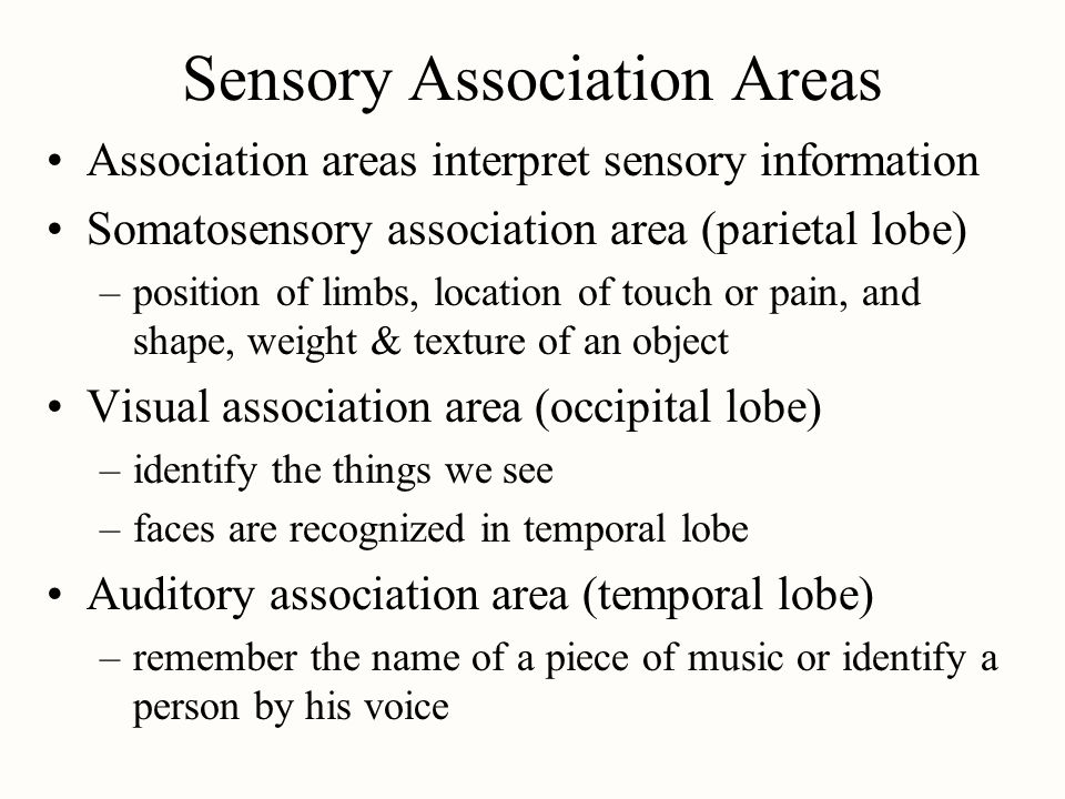 Sensory Association Areas