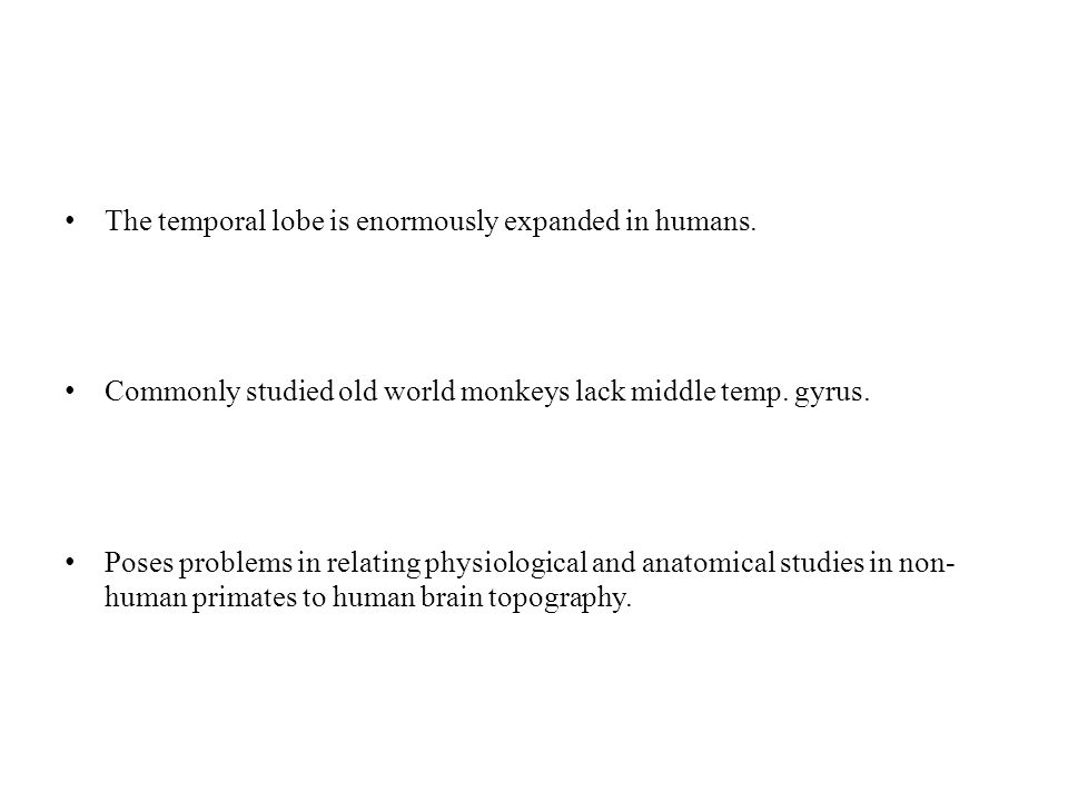 The temporal lobe is enormously expanded in humans.