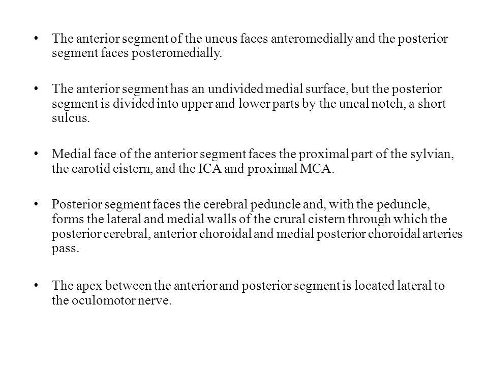 The anterior segment of the uncus faces anteromedially and the posterior segment faces posteromedially.