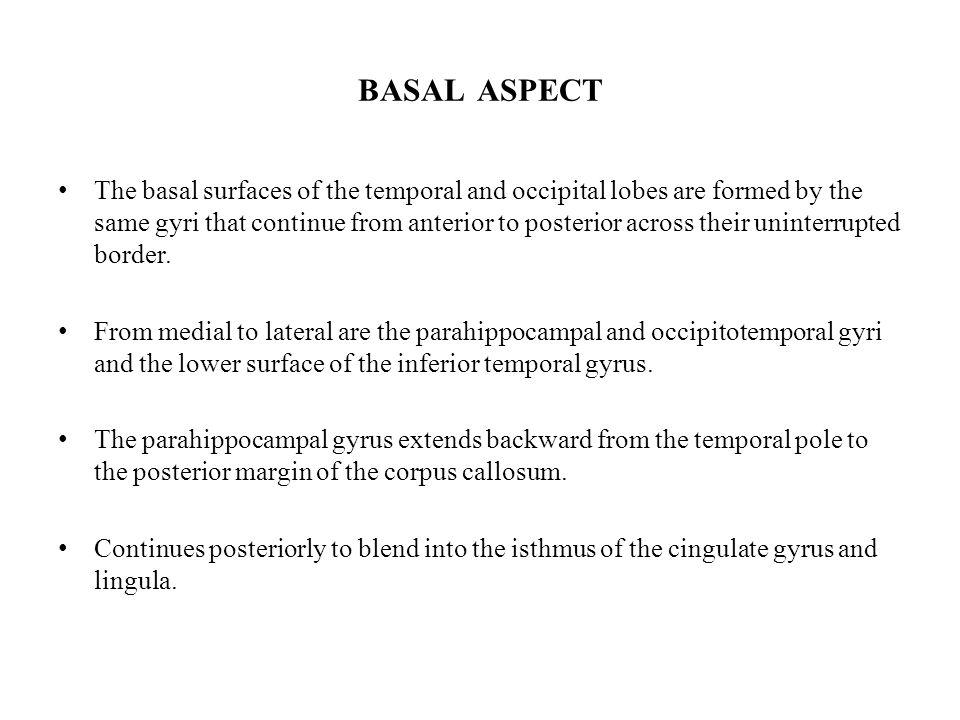 BASAL ASPECT