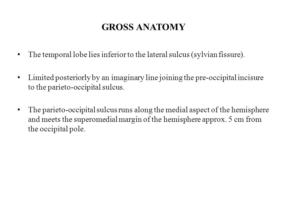 GROSS ANATOMY The temporal lobe lies inferior to the lateral sulcus (sylvian fissure).