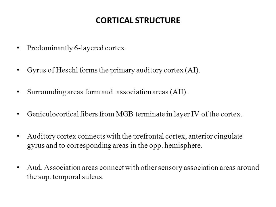 CORTICAL STRUCTURE Predominantly 6-layered cortex.