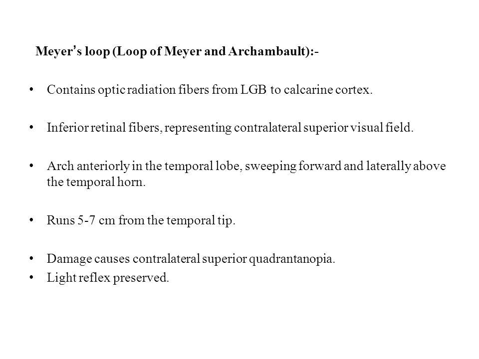 Meyer's loop (Loop of Meyer and Archambault):-