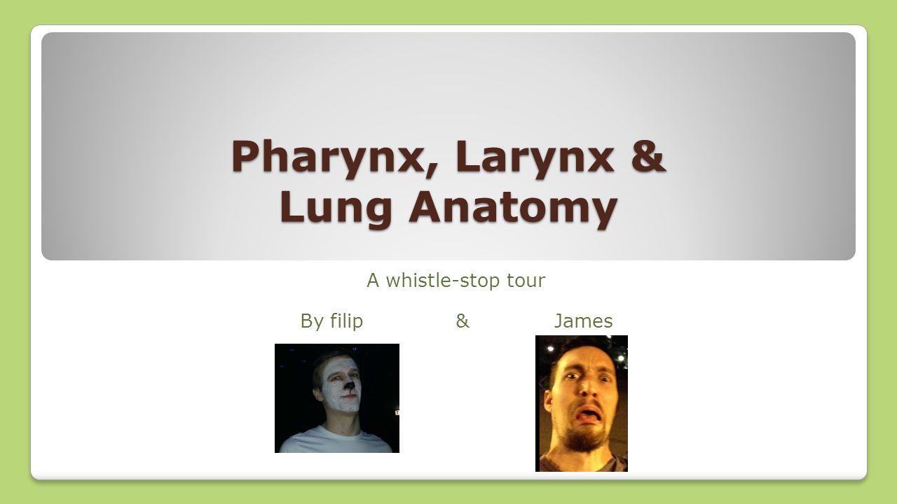 Pharynx, Larynx & Lung Anatomy