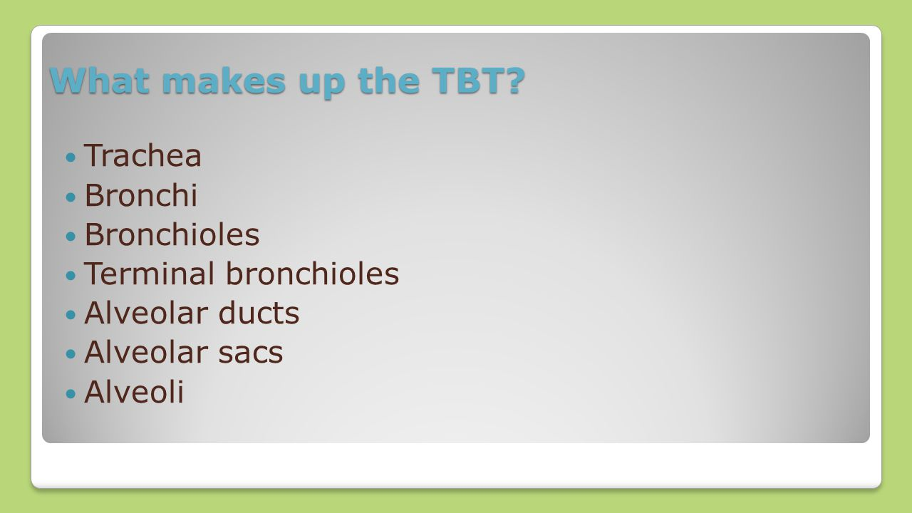 What makes up the TBT Trachea Bronchi Bronchioles