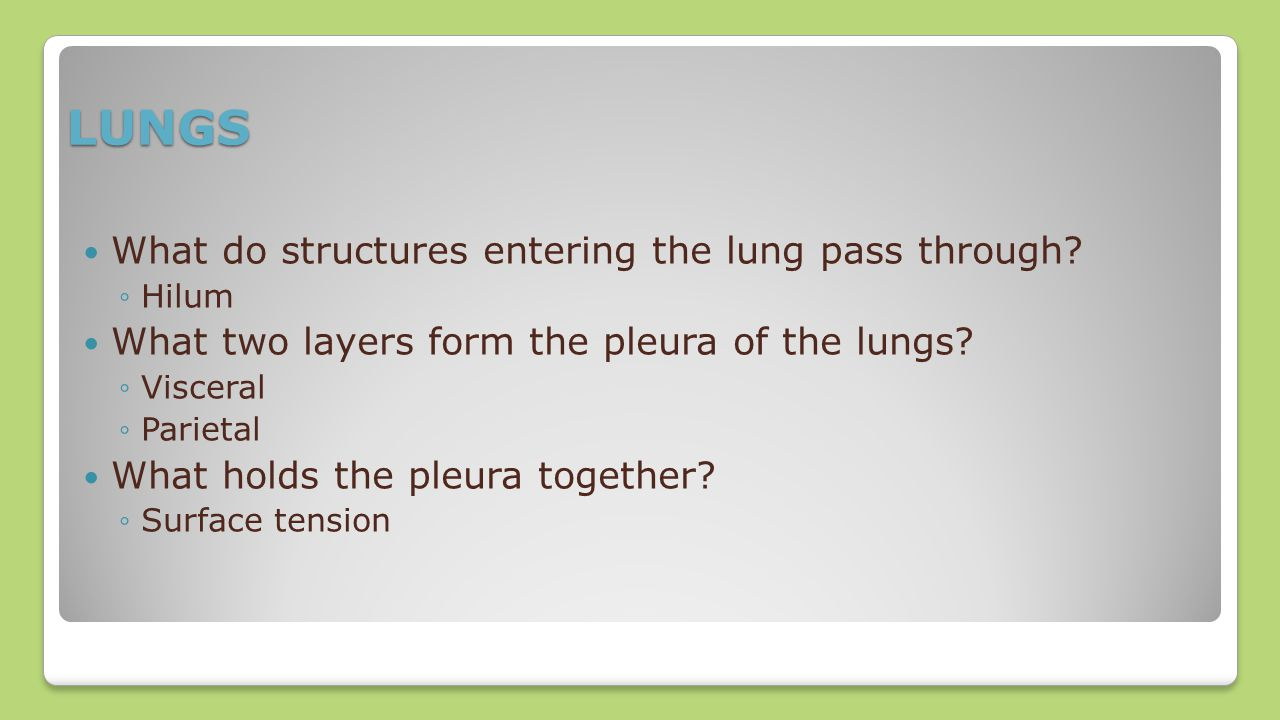 LUNGS What do structures entering the lung pass through