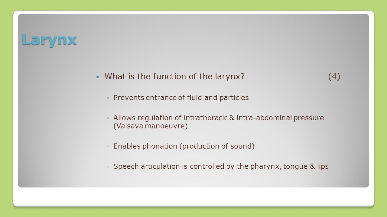 Larynx What is the function of the larynx (4)