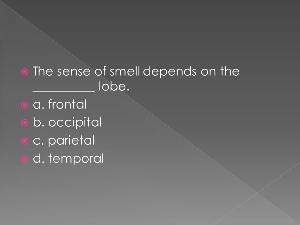 The sense of smell depends on the __________ lobe.