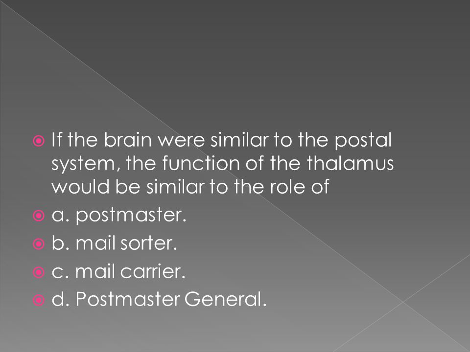 If the brain were similar to the postal system, the function of the thalamus would be similar to the role of