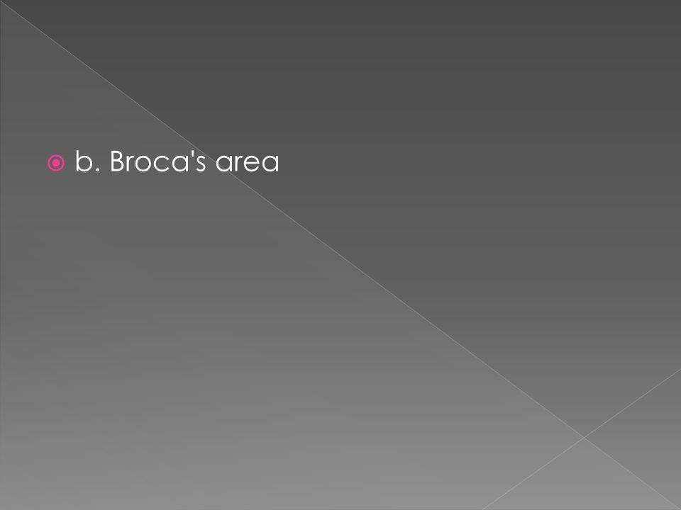 b. Broca s area