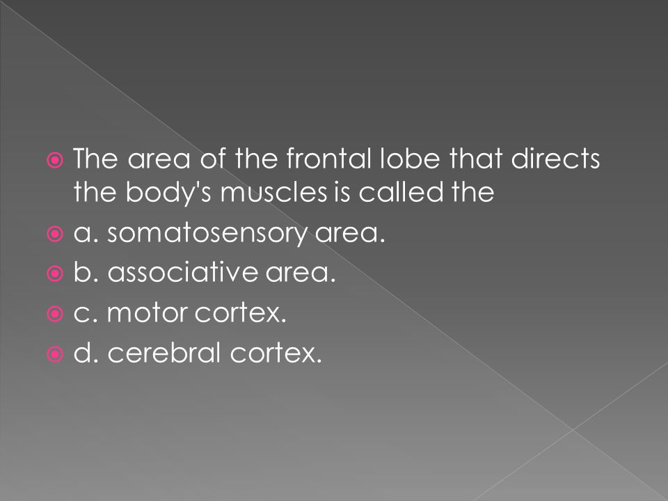 The area of the frontal lobe that directs the body s muscles is called the