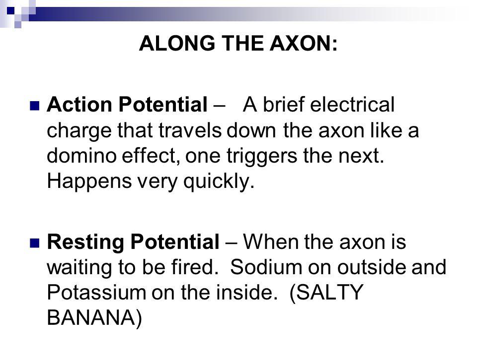 ALONG THE AXON: