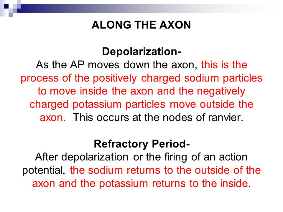 ALONG THE AXON Depolarization- As the AP moves down the axon, this is the process of the positively charged sodium particles to move inside the axon and the negatively charged potassium particles move outside the axon.