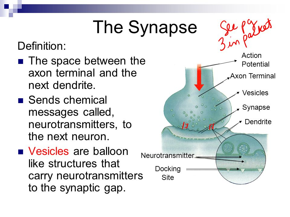The Synapse Definition: