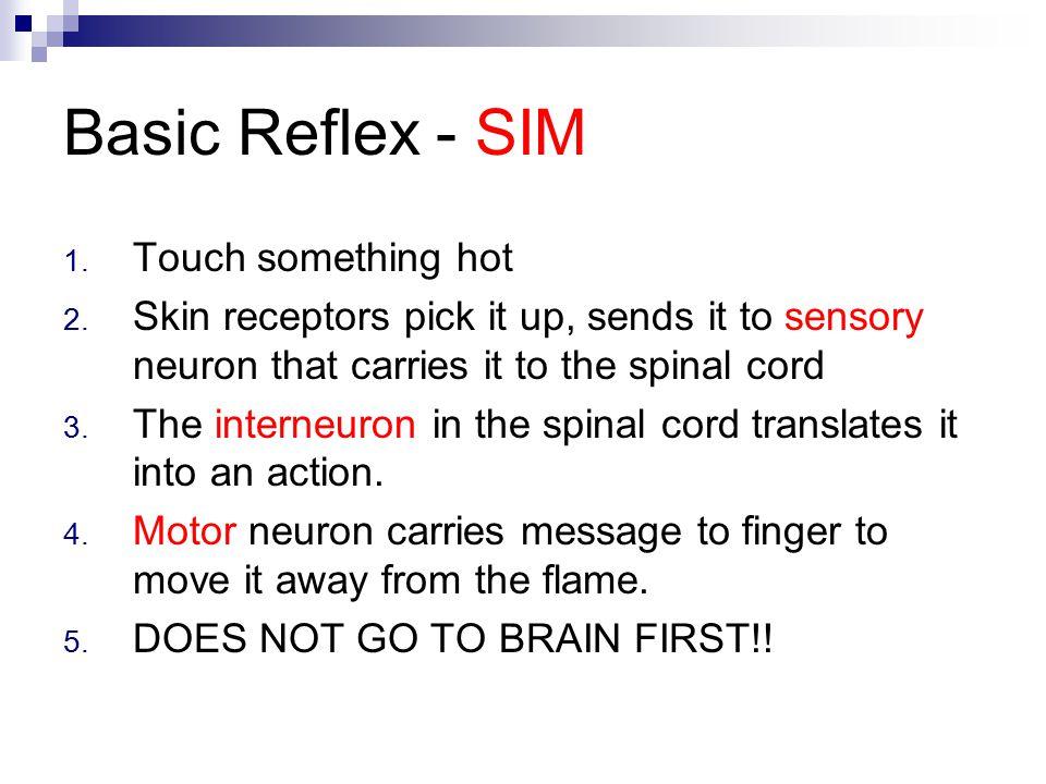 Basic Reflex - SIM Touch something hot