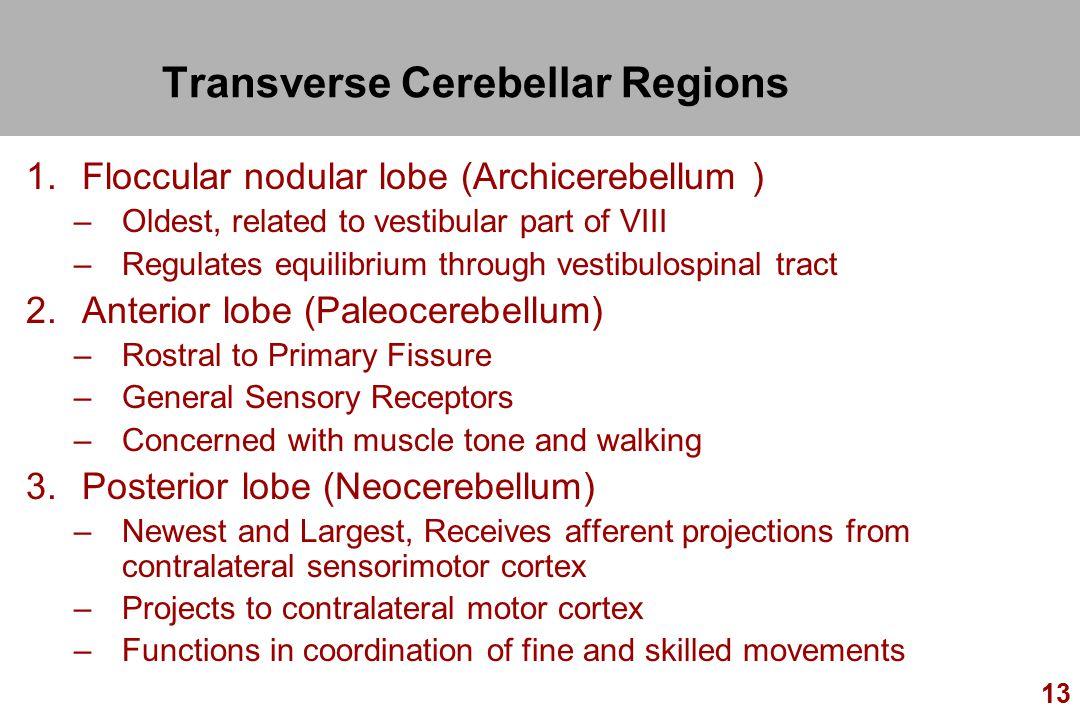 Transverse Cerebellar Regions
