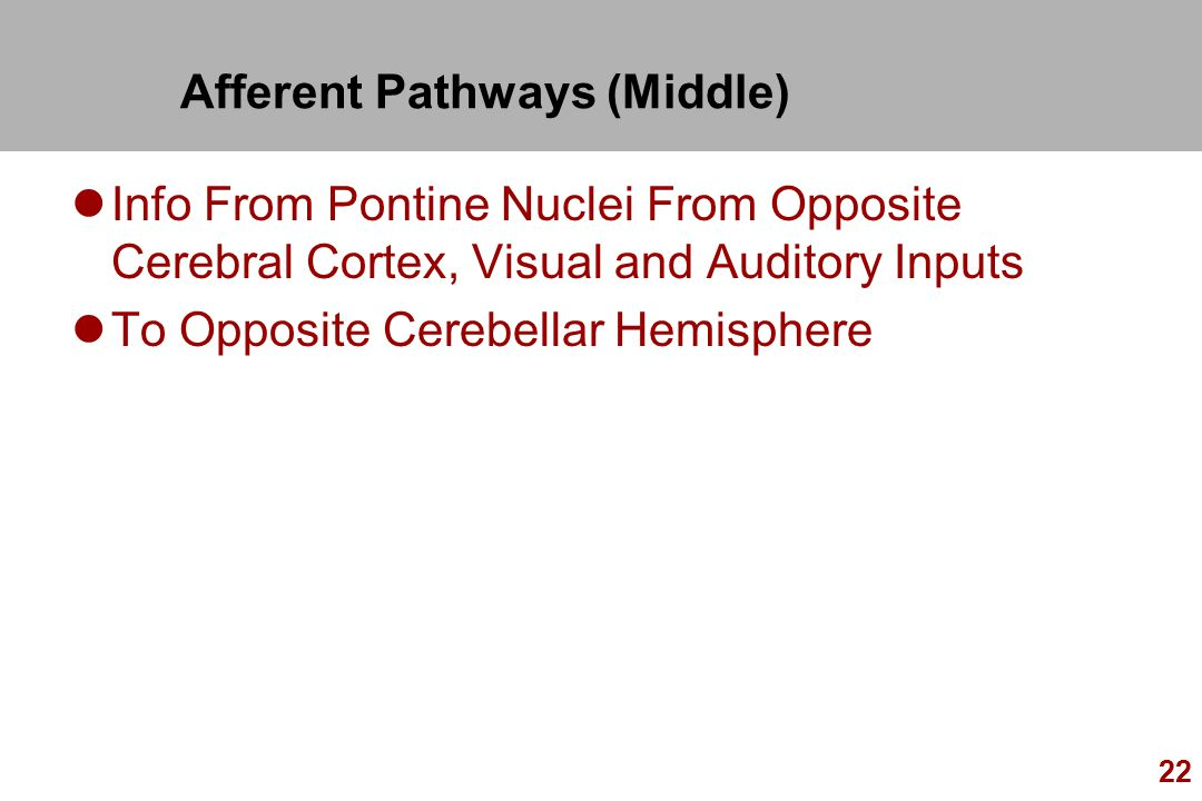 Afferent Pathways (Middle)