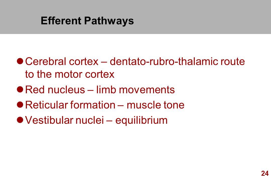 Efferent Pathways Cerebral cortex – dentato-rubro-thalamic route to the motor cortex. Red nucleus – limb movements.