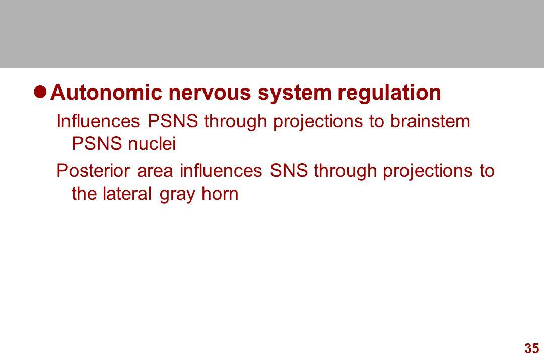 Autonomic nervous system regulation