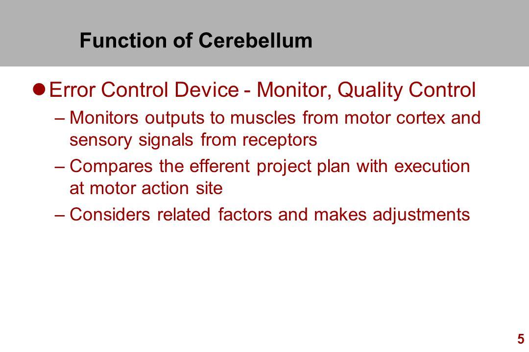 Function of Cerebellum