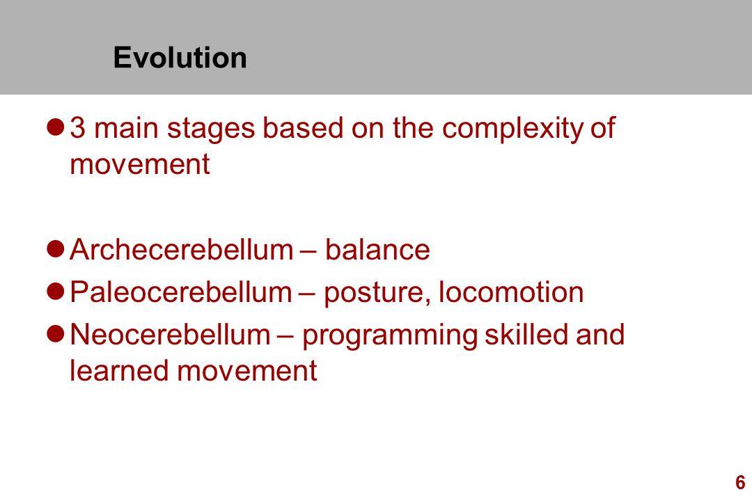 Evolution 3 main stages based on the complexity of movement. Archecerebellum – balance. Paleocerebellum – posture, locomotion.