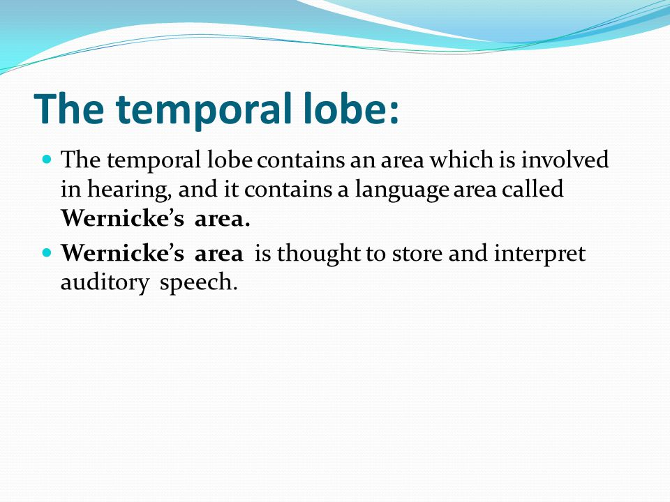The temporal lobe: The temporal lobe contains an area which is involved in hearing, and it contains a language area called Wernicke's area.