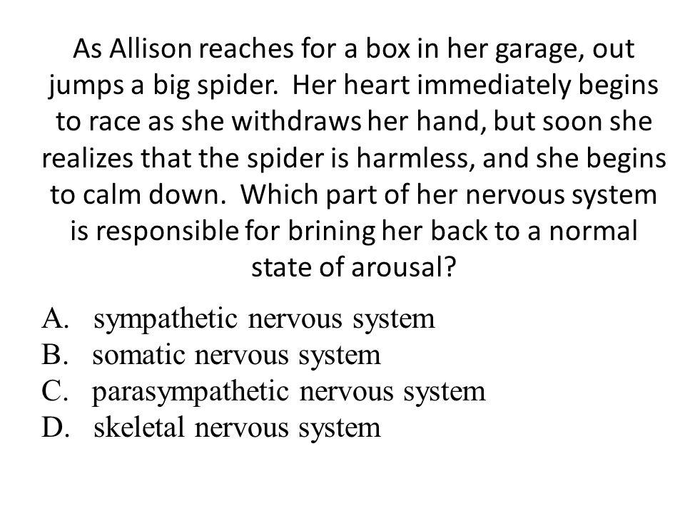 A. sympathetic nervous system B. somatic nervous system