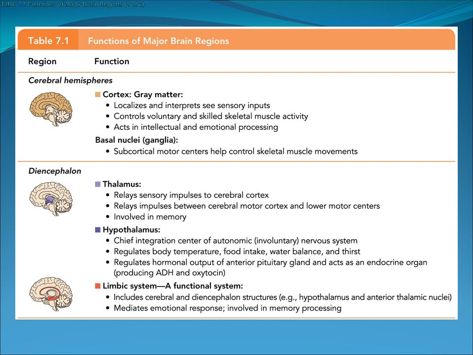 Table 7.1 Functions of Major Brain Regions (1 of 2)