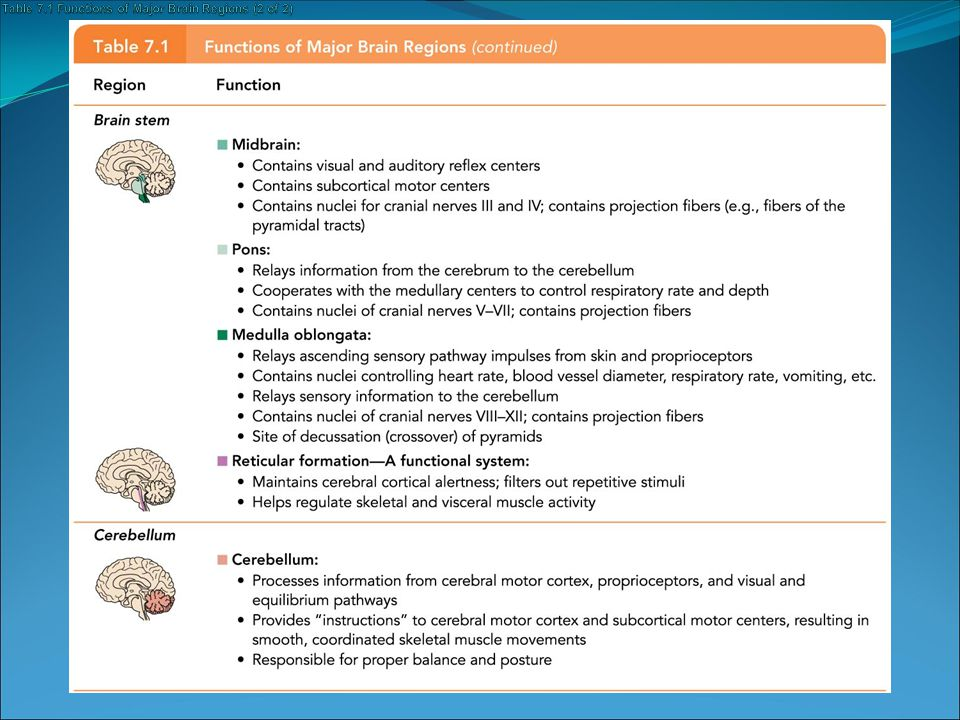 Table 7.1 Functions of Major Brain Regions (2 of 2)