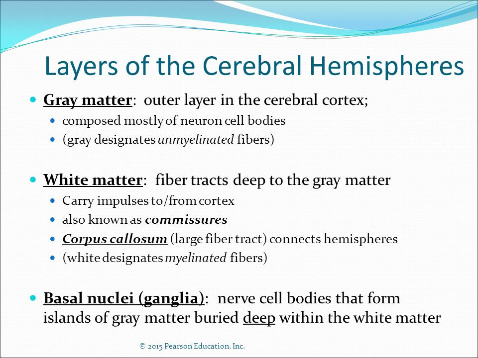 Layers of the Cerebral Hemispheres
