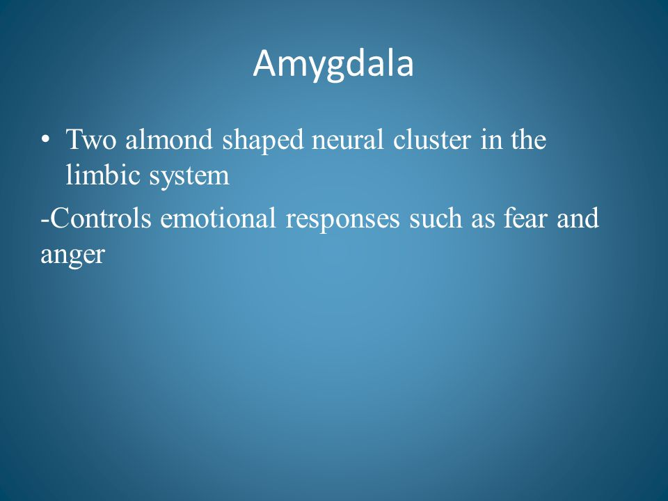 Amygdala Two almond shaped neural cluster in the limbic system
