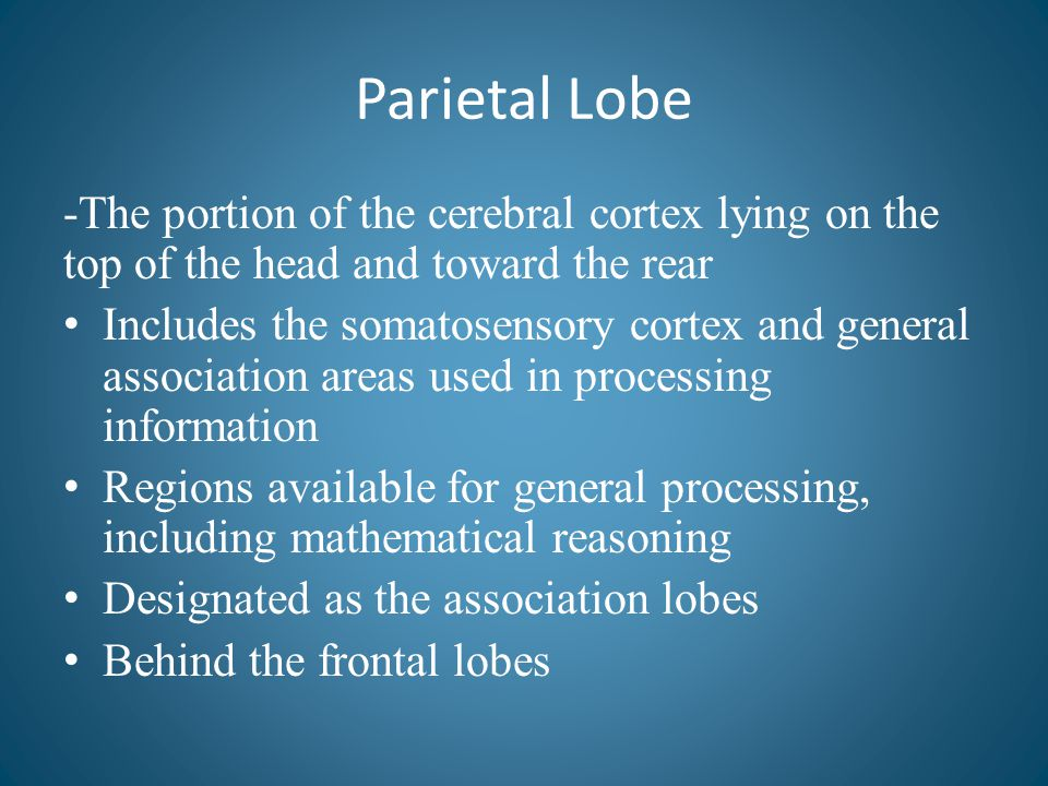 Parietal Lobe -The portion of the cerebral cortex lying on the top of the head and toward the rear.