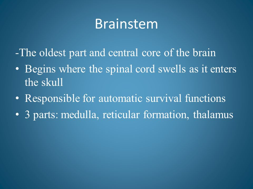 Brainstem -The oldest part and central core of the brain