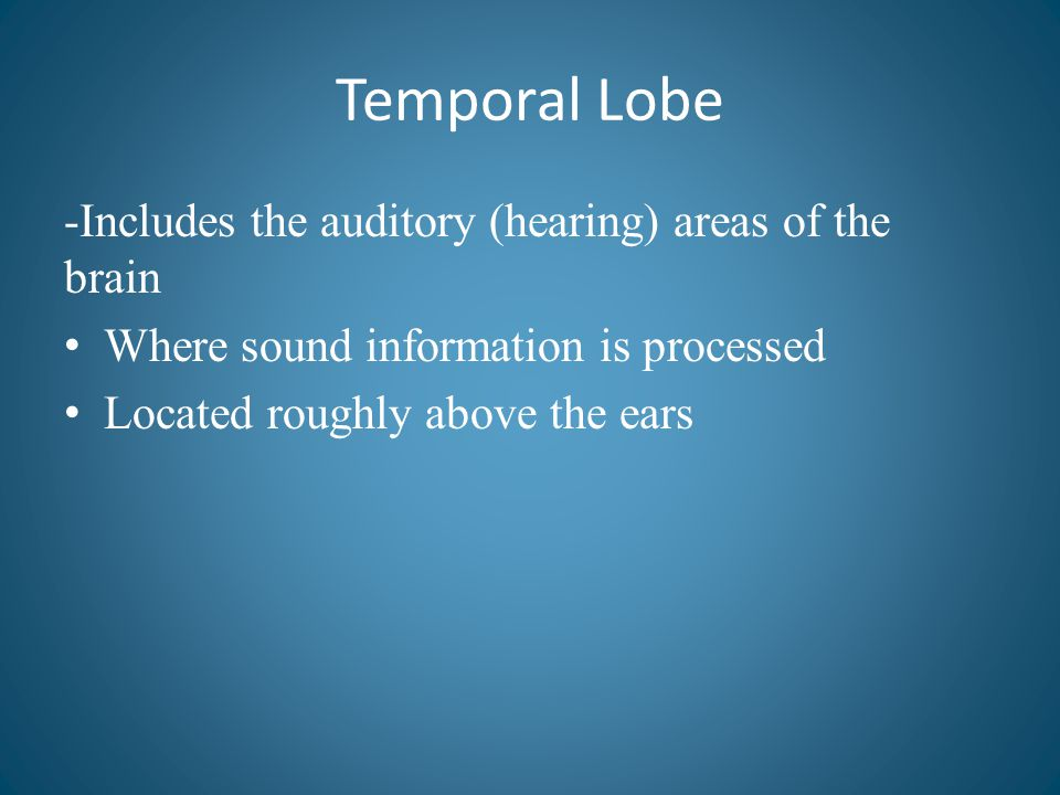 Temporal Lobe -Includes the auditory (hearing) areas of the brain