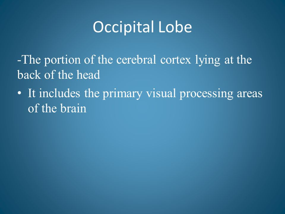 Occipital Lobe -The portion of the cerebral cortex lying at the back of the head.