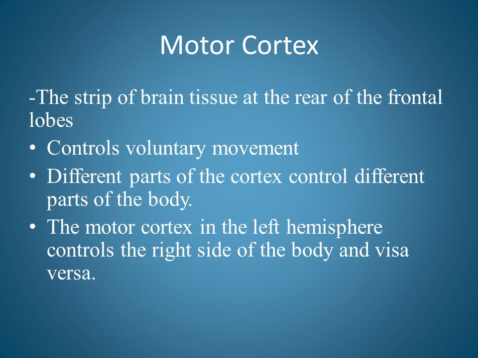 Motor Cortex -The strip of brain tissue at the rear of the frontal lobes. Controls voluntary movement.