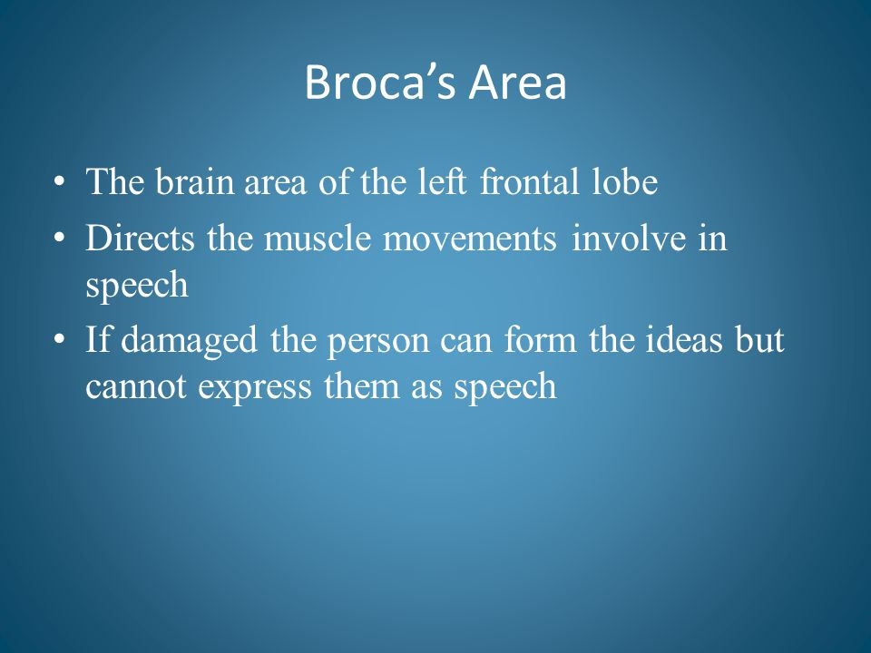 Broca's Area The brain area of the left frontal lobe
