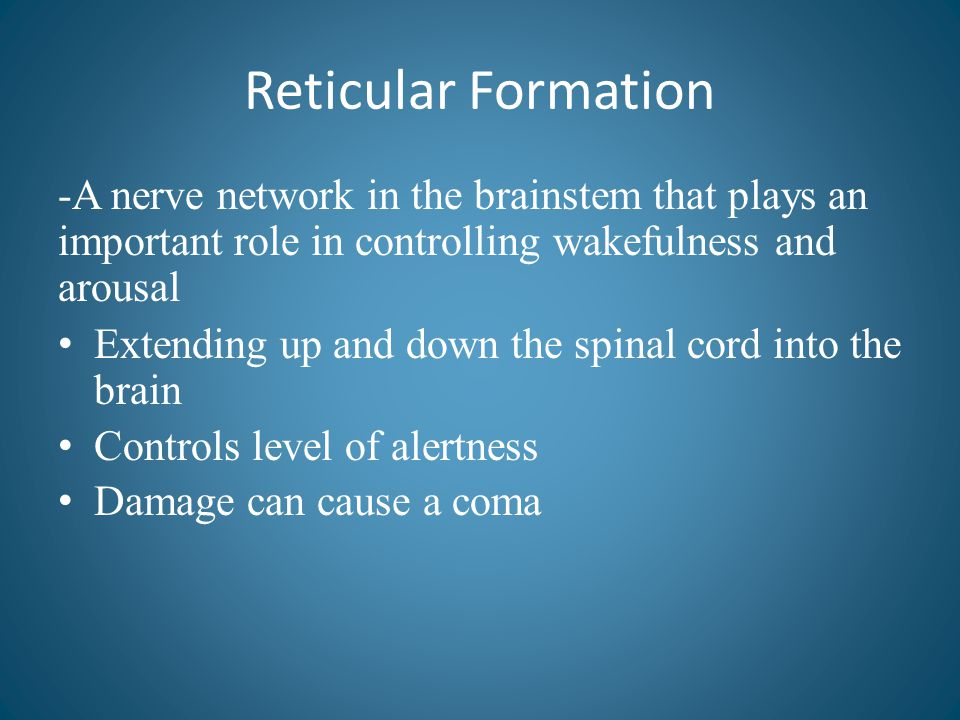 Reticular Formation -A nerve network in the brainstem that plays an important role in controlling wakefulness and arousal.