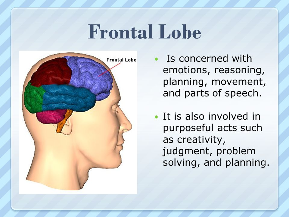 Frontal Lobe Is concerned with emotions, reasoning, planning, movement, and parts of speech.
