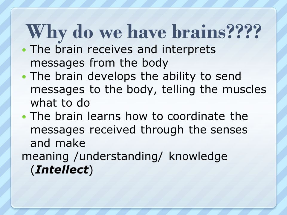 Why do we have brains The brain receives and interprets messages from the body.