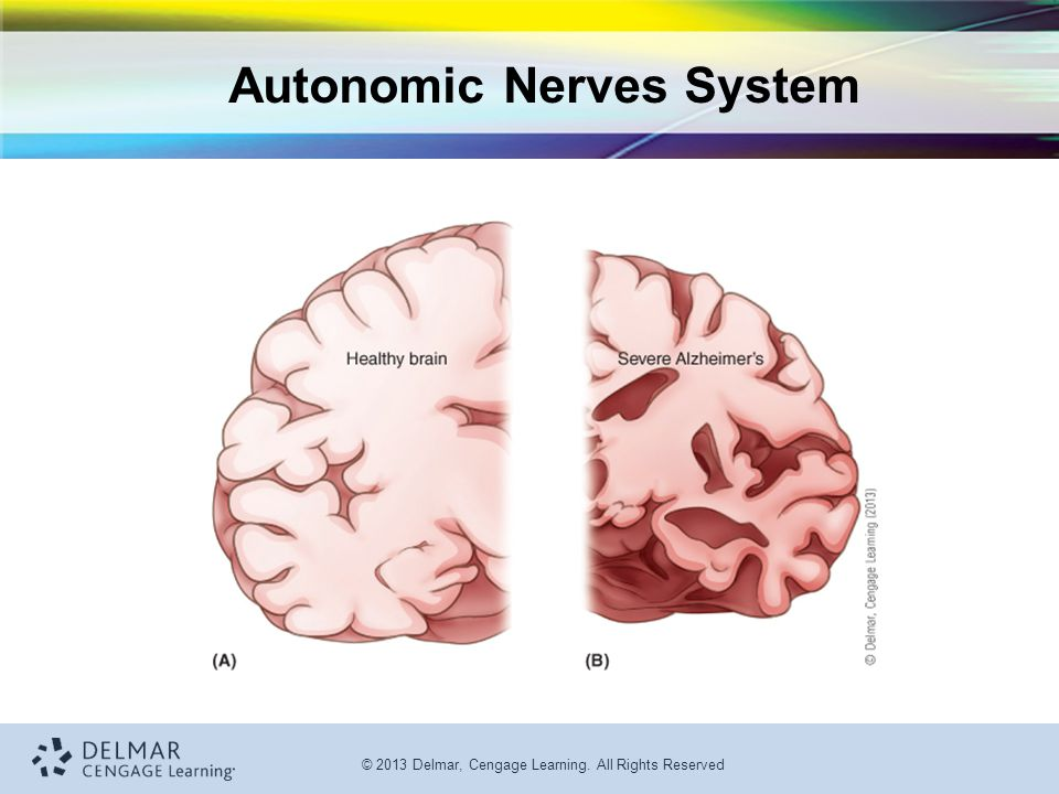 Autonomic Nerves System
