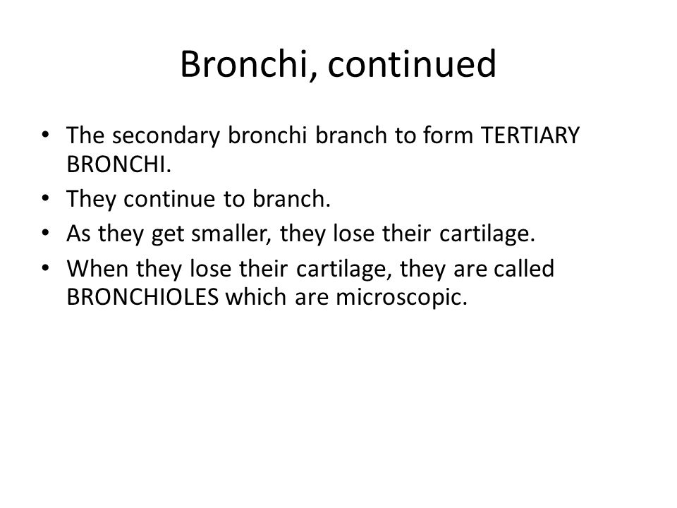 Bronchi, continued The secondary bronchi branch to form TERTIARY BRONCHI. They continue to branch.