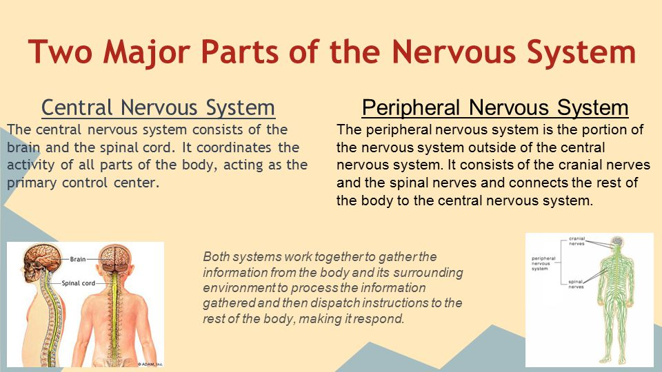 Interactions Between Two Neurons (Neurotransmission)