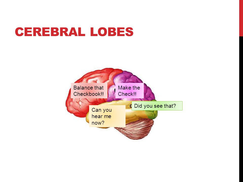 Cerebral Lobes Balance that Checkbook!! Make the Check!!