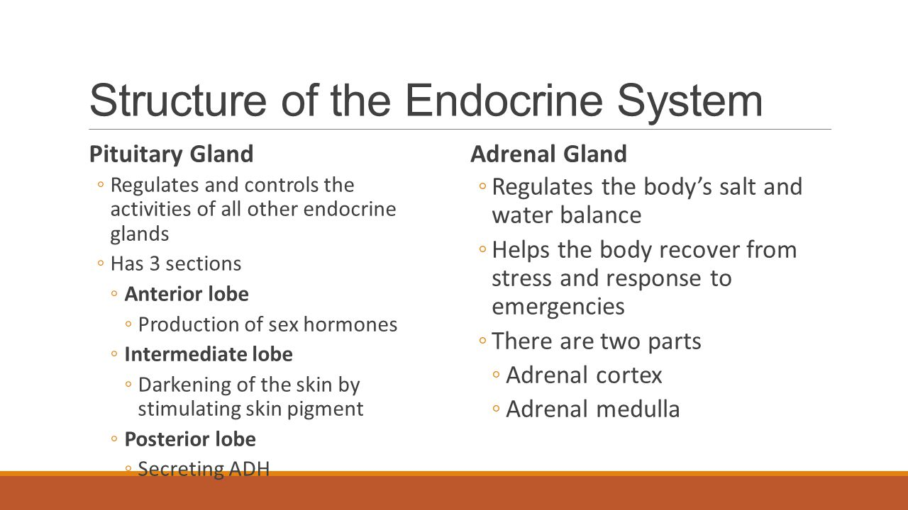 Structure of the Endocrine System