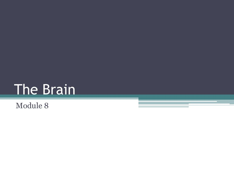 The Brain Module 8
