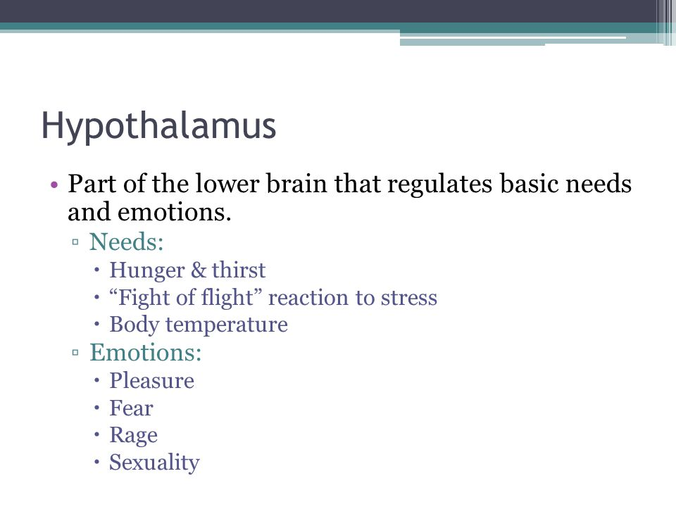 Hypothalamus Part of the lower brain that regulates basic needs and emotions. Needs: Hunger & thirst.