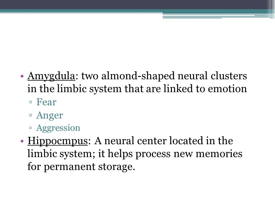 Amygdula: two almond-shaped neural clusters in the limbic system that are linked to emotion