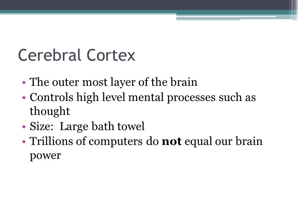 Cerebral Cortex The outer most layer of the brain